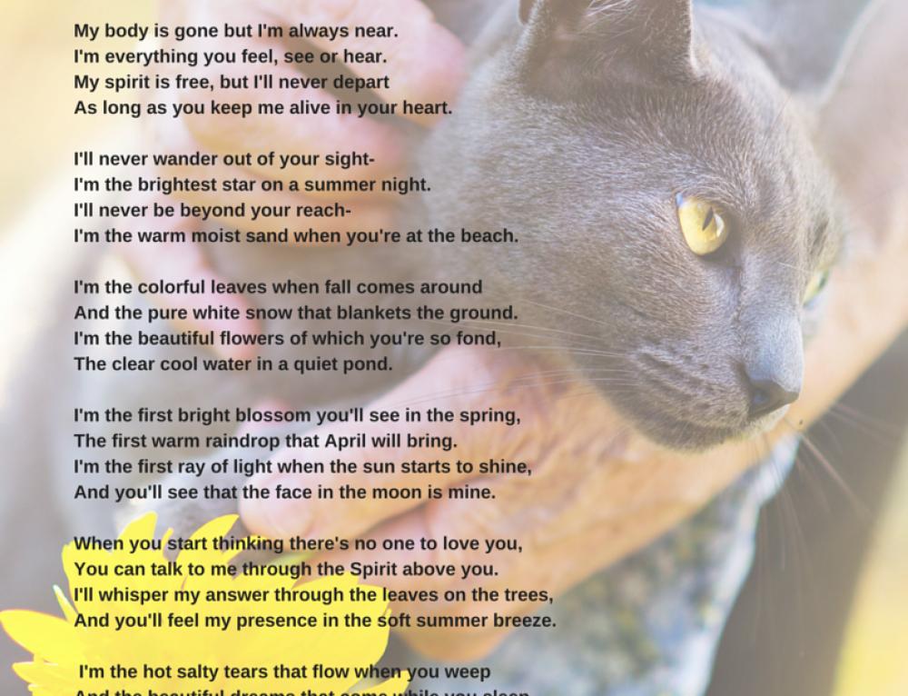 Pet Loss Poem I'm Still Here