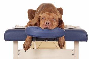 Canine Massage and Energy Healing @ Davis Dog Training | Belmont | New Hampshire | United States