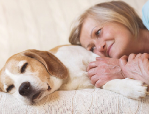 Pet Loss Grief Over Sixty… How Do You Recover?