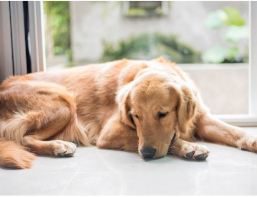 Dealing with the Loss of a Pet