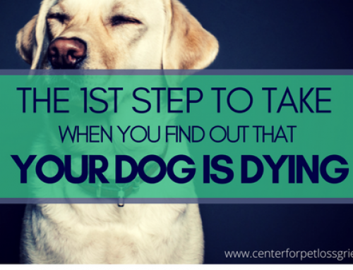 The 1st Thing To Do When You Get The News Your Dog is Dying