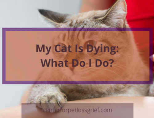 My Cat Is Dying What Do I Do?