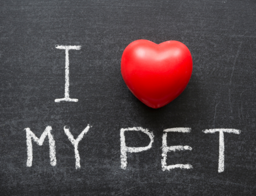 Valentine Celebrations for Pet for Pet Loss