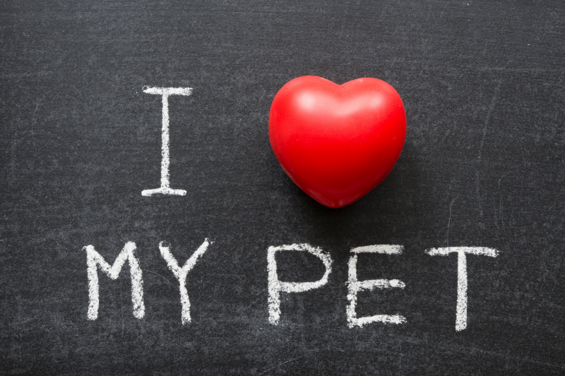 Valentine Celebrations for Pet Loss