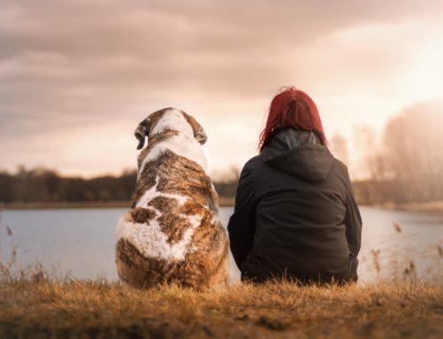 Handling Pet Euthanasia