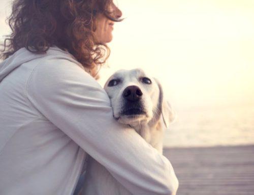 Gratitude A Pet Loss Poem